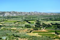 hills and olives alpilles provence